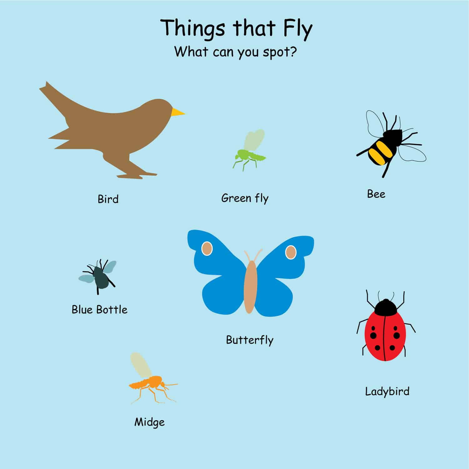 Things That Fly Nature Board